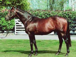 Legendary stallion Zabeel was retired from stud duties this week