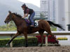 Big Orange at track work, in preparation for LONGINES Hong Kong International Races.
