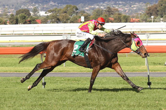 Finiguerra winning the Port Adelaide Cup
