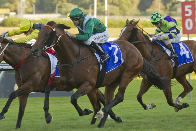 All Too Hard winning the 2013 Yarraman Park All Aged Stakes