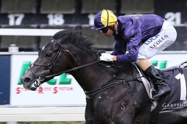 Beauty's Beast winning the McGrath South Pacific Classic