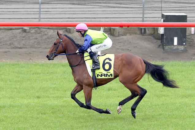Juliette running in the Murdoch Newell Stakes
