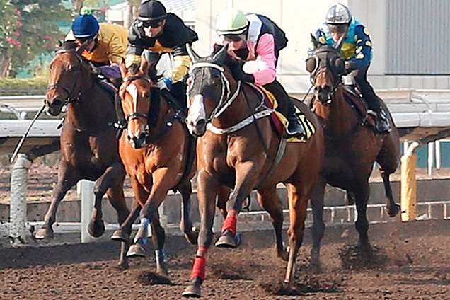 Beauty Only (pink sleeves) crosses the line fourth in todays first trial on the dirt track.