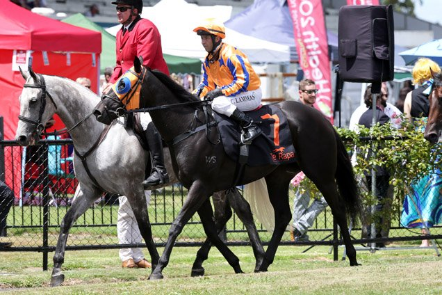 Gold Fever running in the Race A Horse With Te Akau 2yo