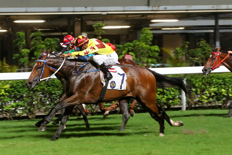 Southern Legend winning the SWEET ORANGE HANDICAP