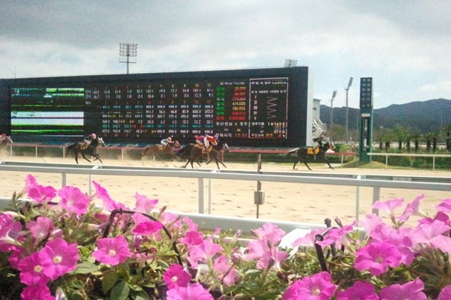 Free Korean Form, Don Scott Ratings And Speed Maps For Friday's Meeting