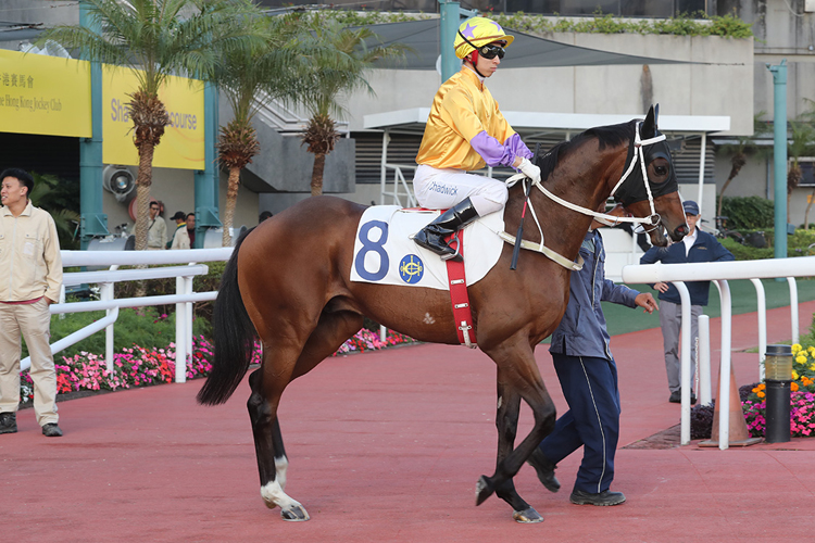 Doctor Geoff is among Tony Cruz's trio in the Hong Kong Classic Cup.