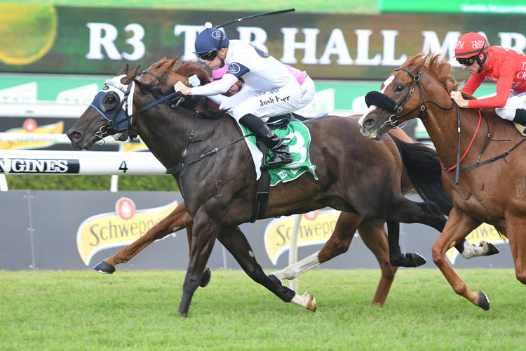 Burning Passion winning the Tab Hall Mark Stakes