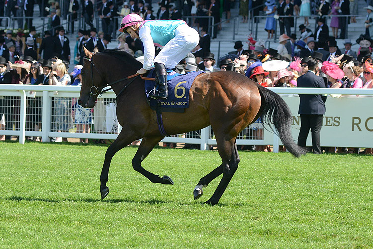 Equilateral pre-race warming up for, the Commonwealth Cup (Group 1) (British Champions Series)