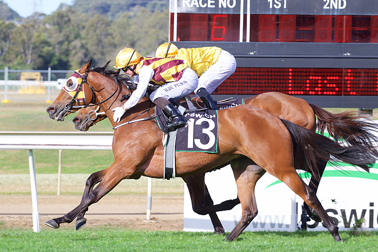 Of The Day winning the Ubet Plate (C6)