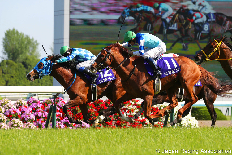 RAINBOW LINE winning the Tenno Sho (Spring) Stakes at Kyoto in Japan.