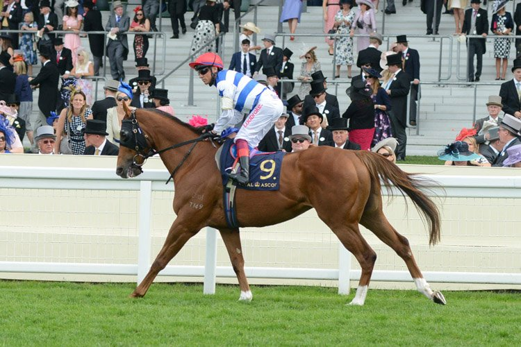 Redkirk Warrior pre-race warming up for the Diamond Jubilee Stakes (Group 1) (British Champions Series)
