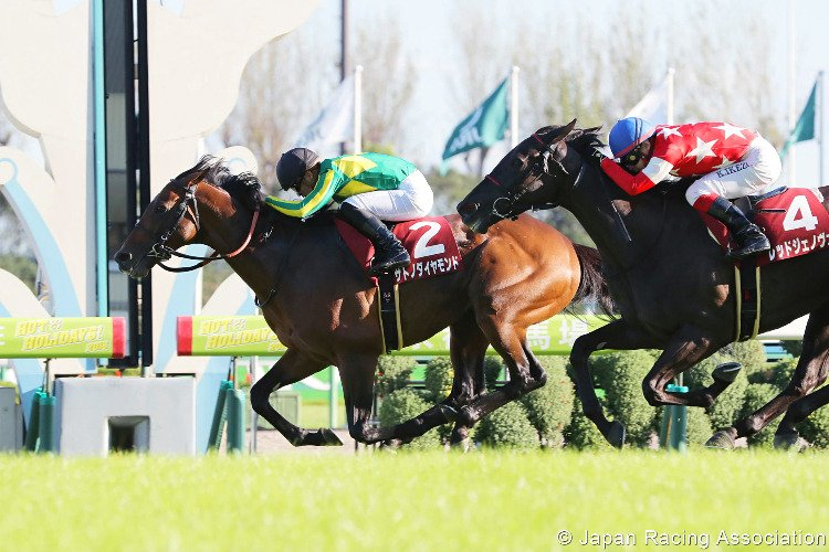 SATONO DIAMOND winning the Kyoto Daishoten at Kyoto in Japan.