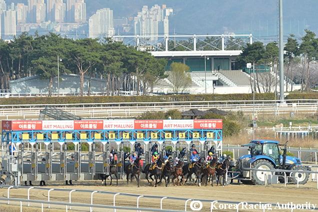 Racecourse : Busan, Korea.