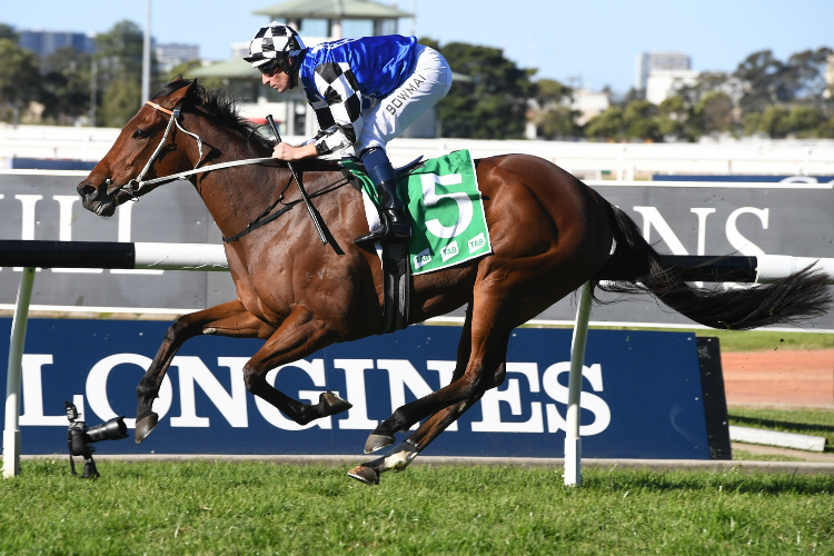 AGENT PIPPA was the winner of aGimcrack Stakes.