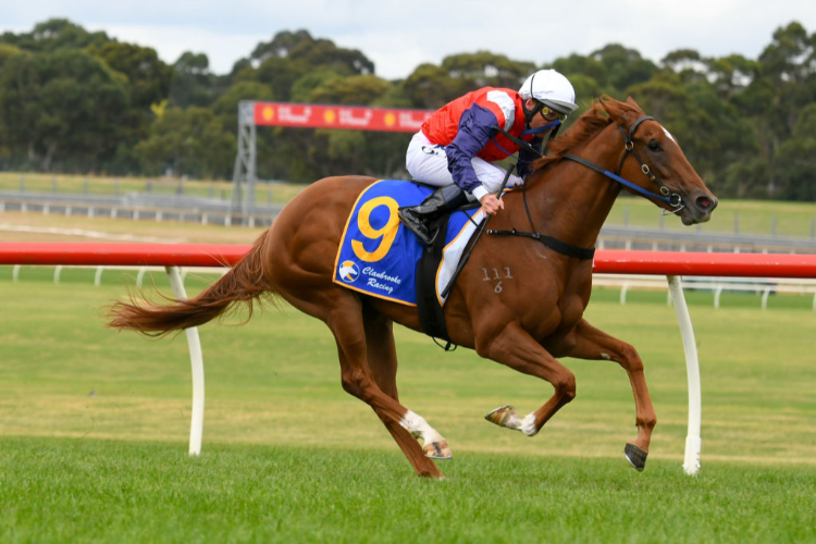LADY LUPINO winning the Clanbrooke Racing Hcp during Melbourne Racing at Sandown Hillside in Melbourne, Australia.