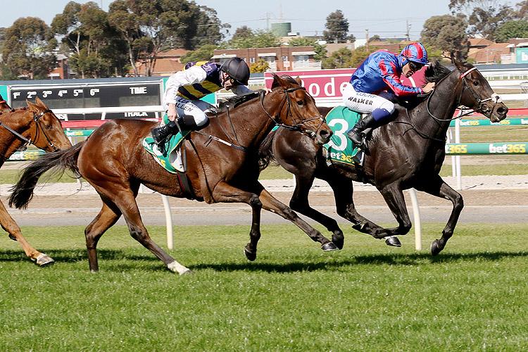 Prince Of Arran winning the Bet365 Geelong Cup