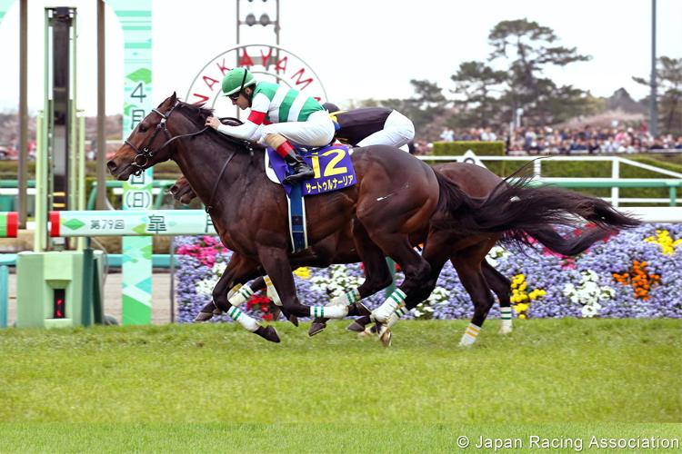SATURNALIA winning the Satsuki Sho in Nakayama, Japan.