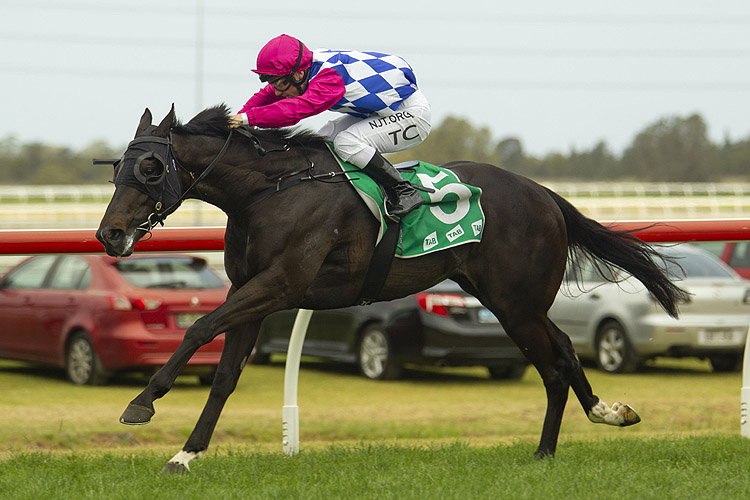 Sneak Preview winning the Tab Highway Hcp (C3)