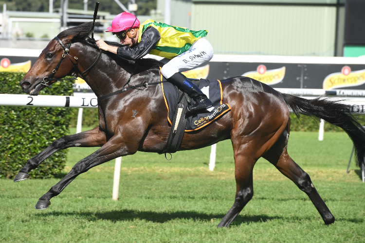 THE CHOSEN ONE winning the Cellarbrations Frank Packer Plate.