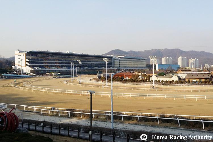 Racecourse : Seoul, Korea.