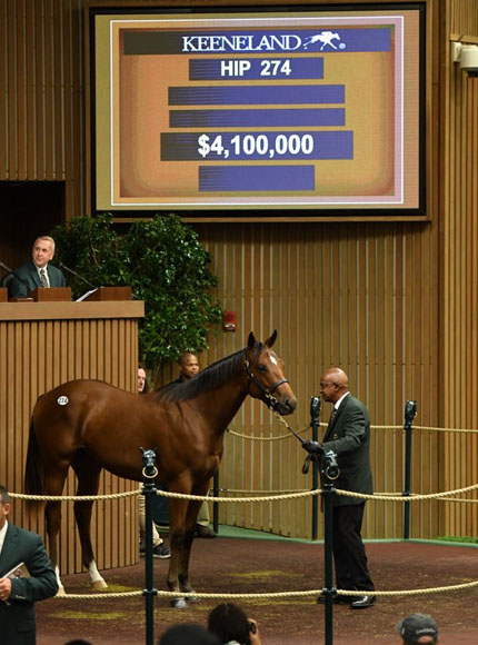 The Curlin colt out of Bounding sold for US$4.1 million at Keeneland's September Yearling Sale.