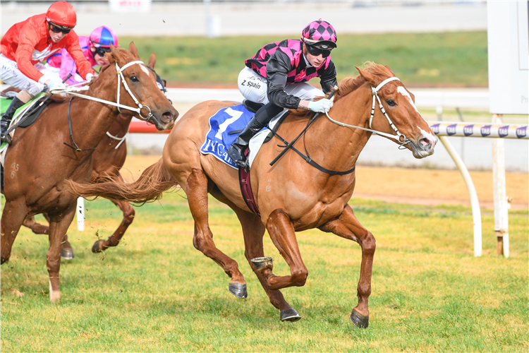 BIG BOY'S GIRL winning the Welcome Back Owners Maiden Plate  in Swan Hill, Australia.