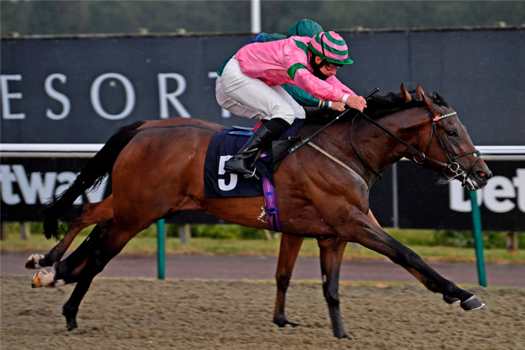 BILLHILLY winning the Betyourway at Betway Handicap at Lingfield Park  in Lingfield, England.