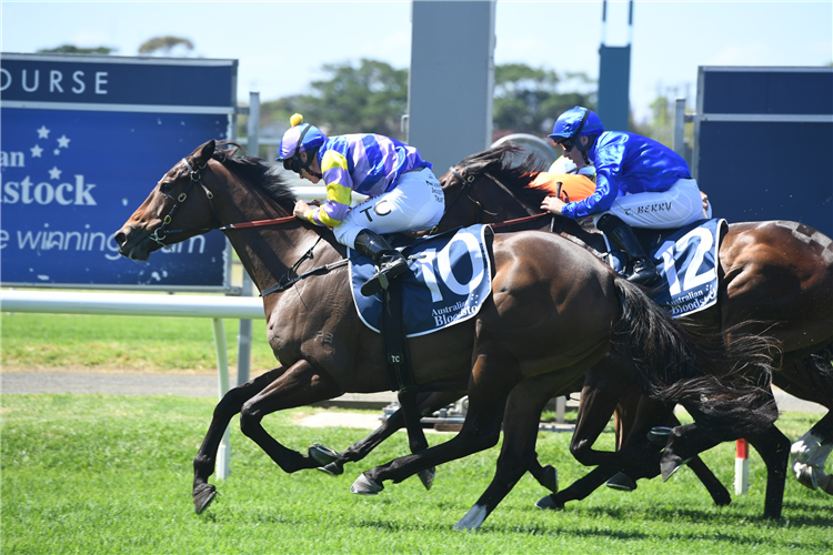 BRING THE RANSOM winning the Guardian Safety Solutions at Newcastle in Australia.