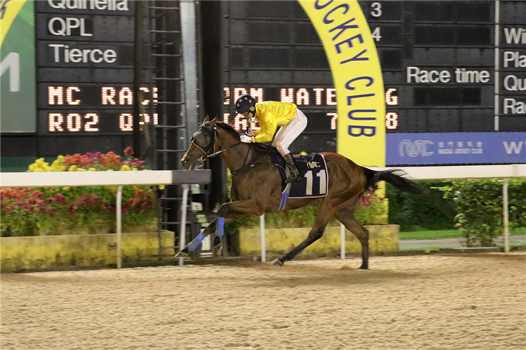 CITY GOLD winning the THE KWEICHOW