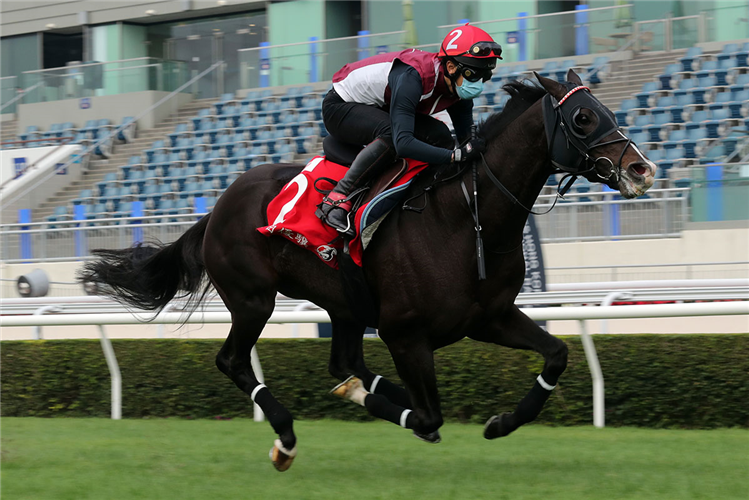 DANON PREMIUM during track work session on the Sha Tin turf.