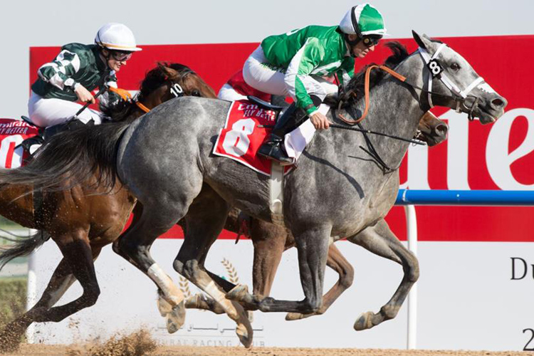DRAFTED wins the Mahab Al Shimaal (G3) on Super Saturday 2019