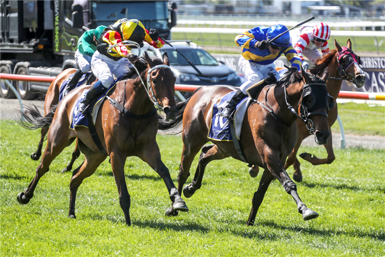 DRAGON STORM winning the 157th New Zealand Cup