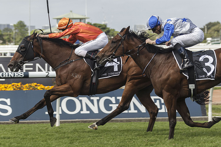 The Bostonian (outside) narrowly fails to run down Dreamforce in the Gr.1 George Ryder Stakes (1500m).