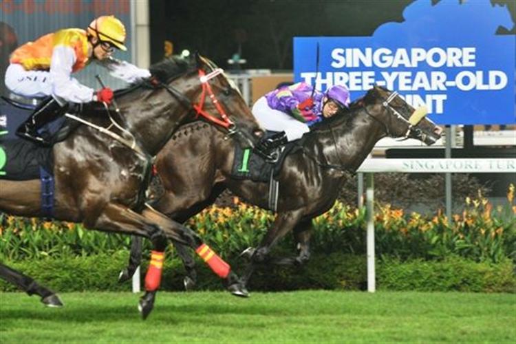 GINGERBREAD MAN winning the SINGAPORE THREE YEAR OLD SPRINT