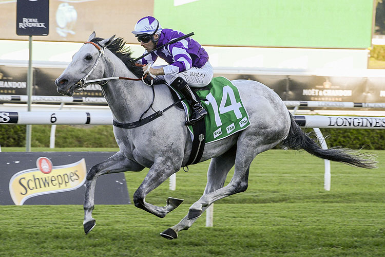GREYWORM winning the Tab Hall Mark Stakes.