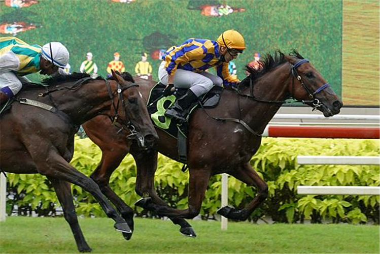 HARD TOO THINK winning the WELL DONE 2016 STAKES RESTRICTED MAIDEN