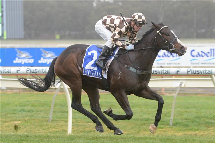 HASSLEFREE  winning the Big Screen Company Class 1 Handicap in Bendigo, Australia.