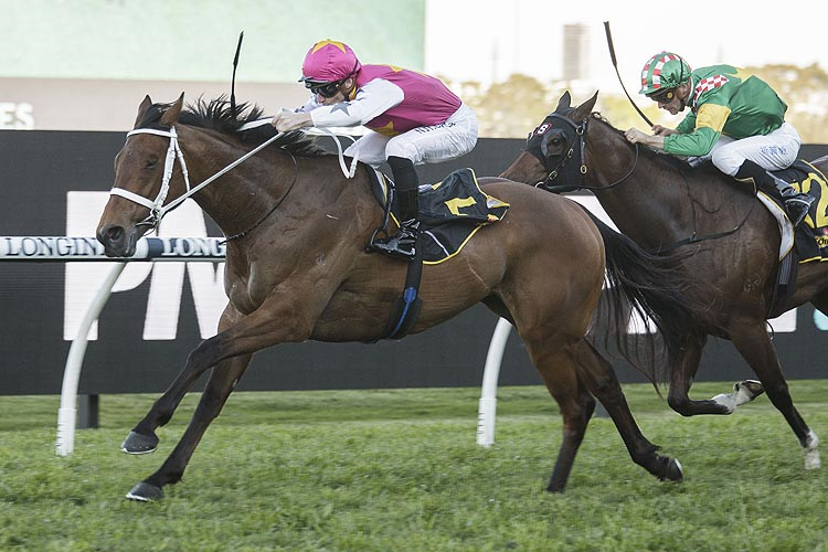 HAUT BRION HER winning the Sheraco Stakes.