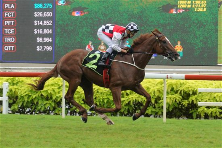 IN ALL HIS GLORY winning the SPALATO 2014 STAKES RESTRICTED MAIDEN