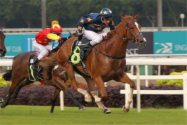 LIM'S SPIN winning the ELITE INVINCIBLE 2018 STAKES RESTRICTED MAIDEN