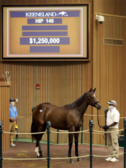 Lot 149 Tapit - Embellish The Lace filly.