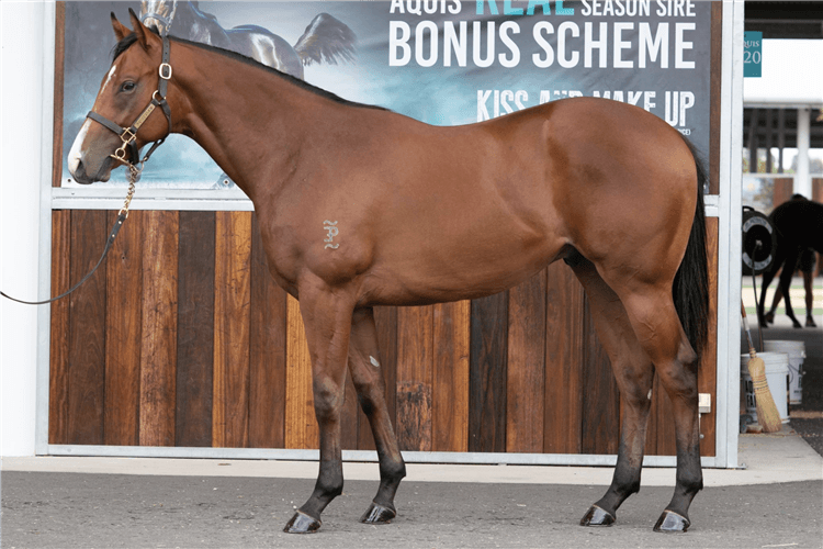 Lot 551 Not A Single Doubt - Vivid colt.