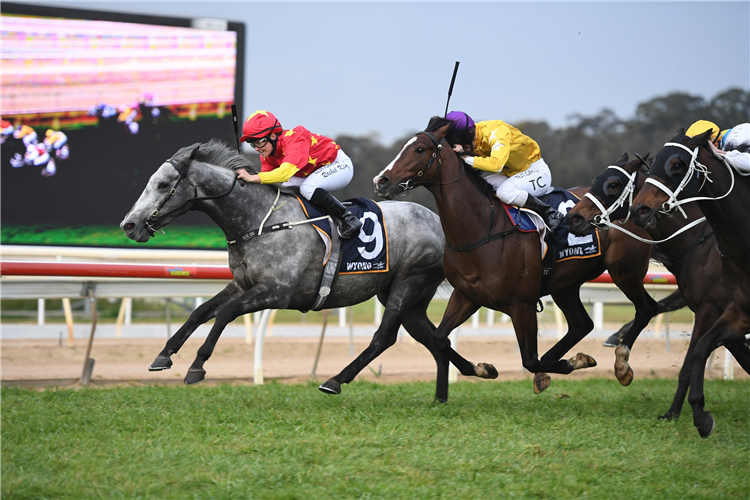 PATHS OF GLORY winning the Carlton Draught Wyong Gold Cup.