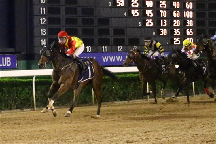 POWERFUL CONQUEROR winning the THE DAFFODIL (Div 1)