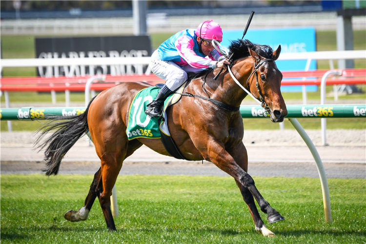 RIVER TWAIN winning the Bet365 Top Tote Plus Maiden Plate in Geelong, Australia.