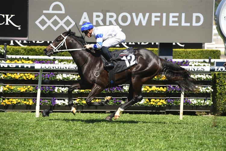 SHAQUERO winning the Arrowfield Breeders' Plate at Royal Randwick in Australia.