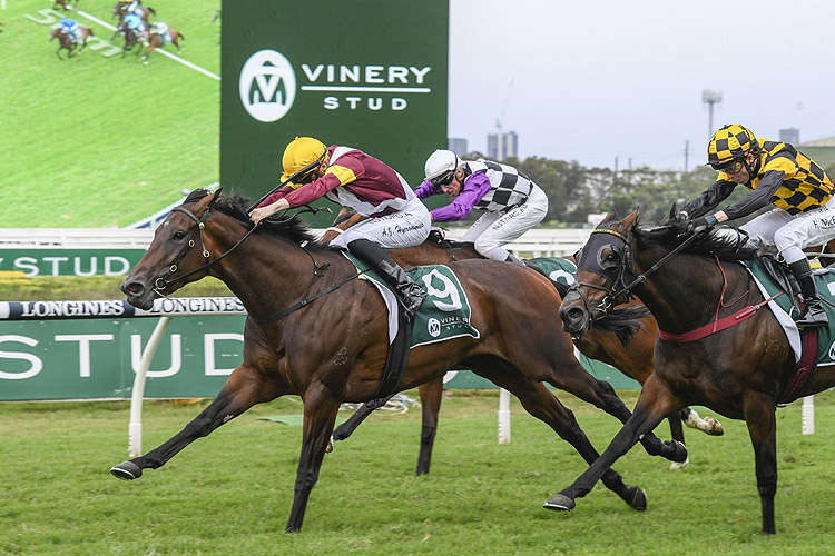 SHOUT THE BAR winning the Vinery Stud Stakes.
