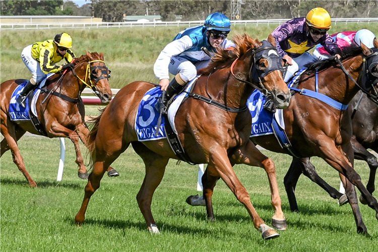 STRATESSA winning the TAC be races ready BM58 Handicap in Hamilton, Australia.