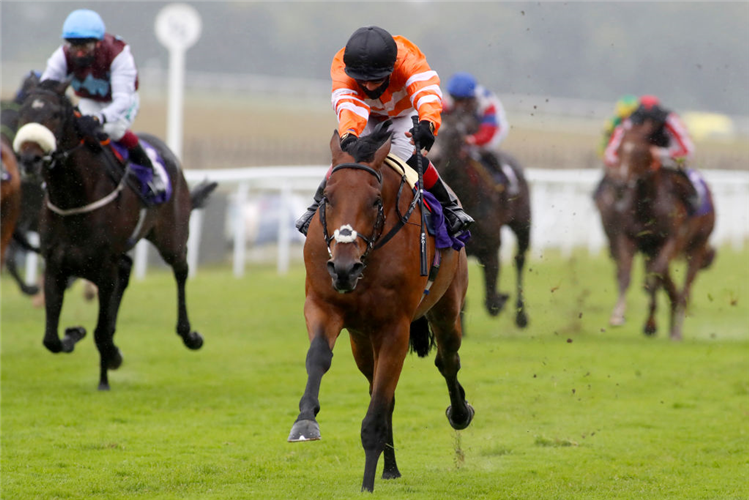 STRAWBERRY ROCK winning the  Stay Alert Median Auction Maiden Stakes Handicap in Beverley, England.
